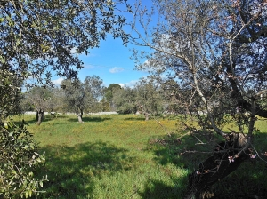 Spring in Puglia